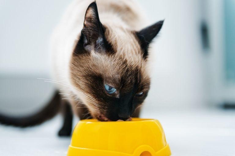 So erkennst du hochwertiges Katzenfutter
