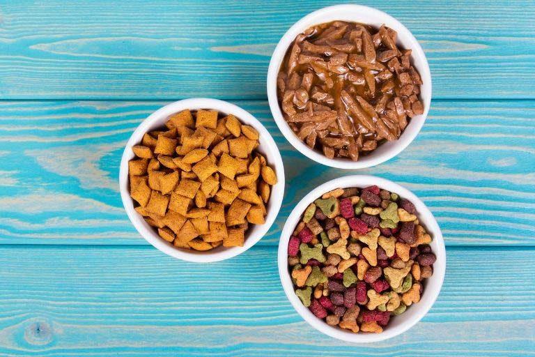 Nass oder Trockenfutter? – So geht Katzenernährung