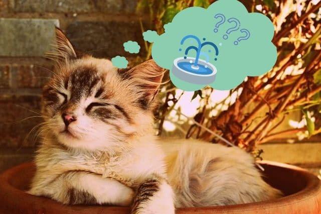 Warum ein Katzentrinkbrunnen benötigt wird