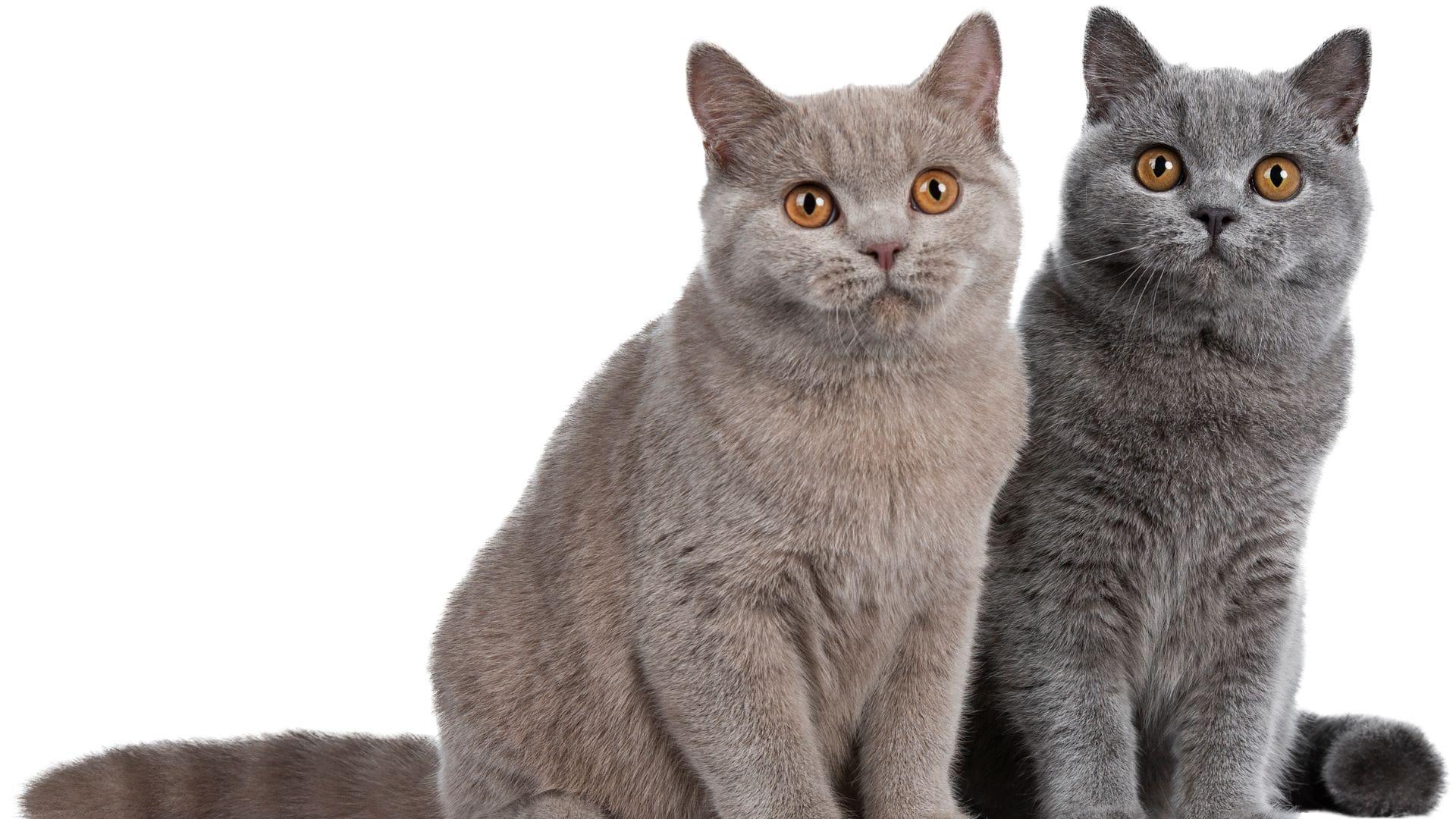 Katze oder Kater? Die wichtigsten Unterschiede
