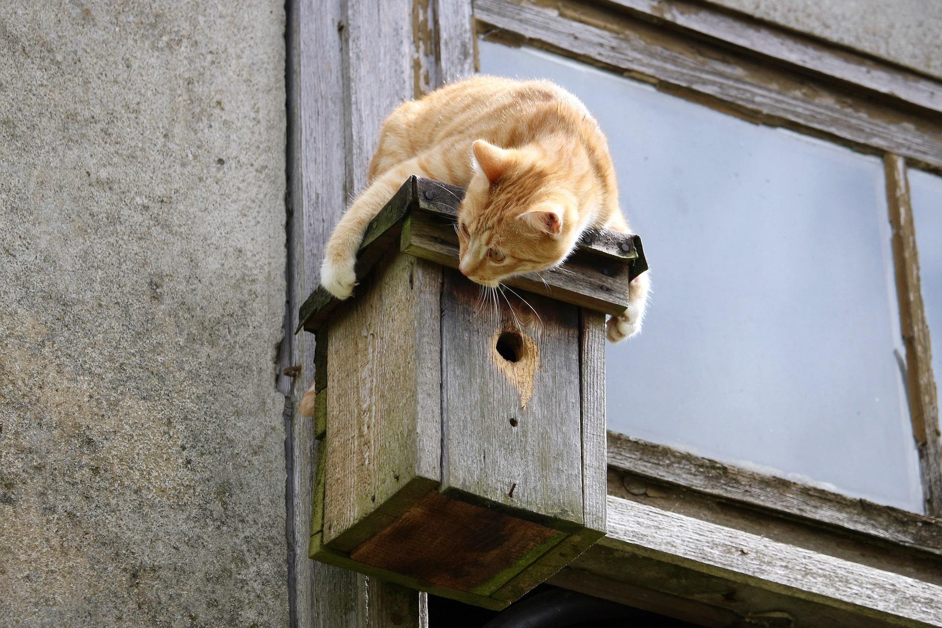 Katze Gefahr Abstürzen