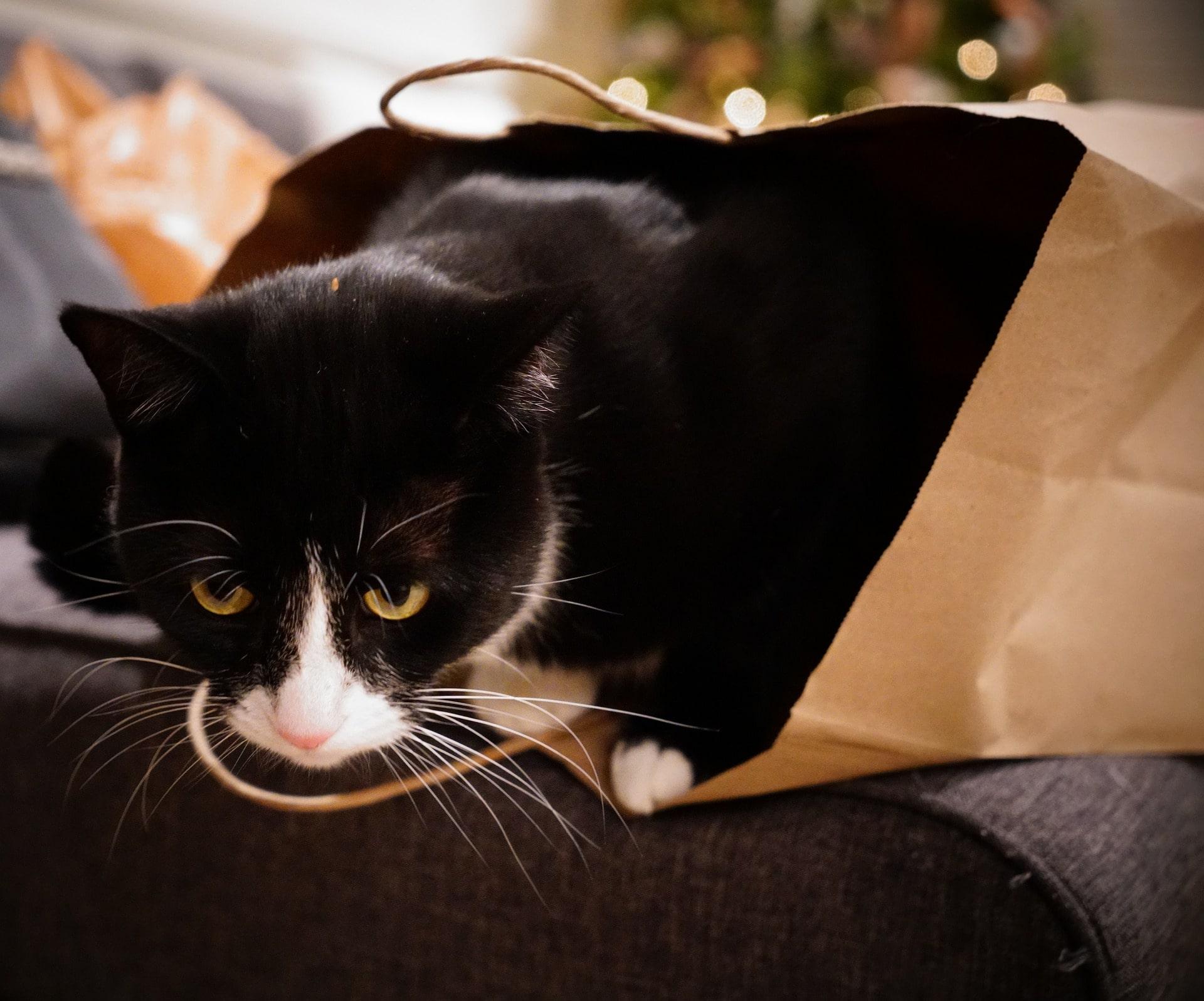 Katze Gefahr strangulieren