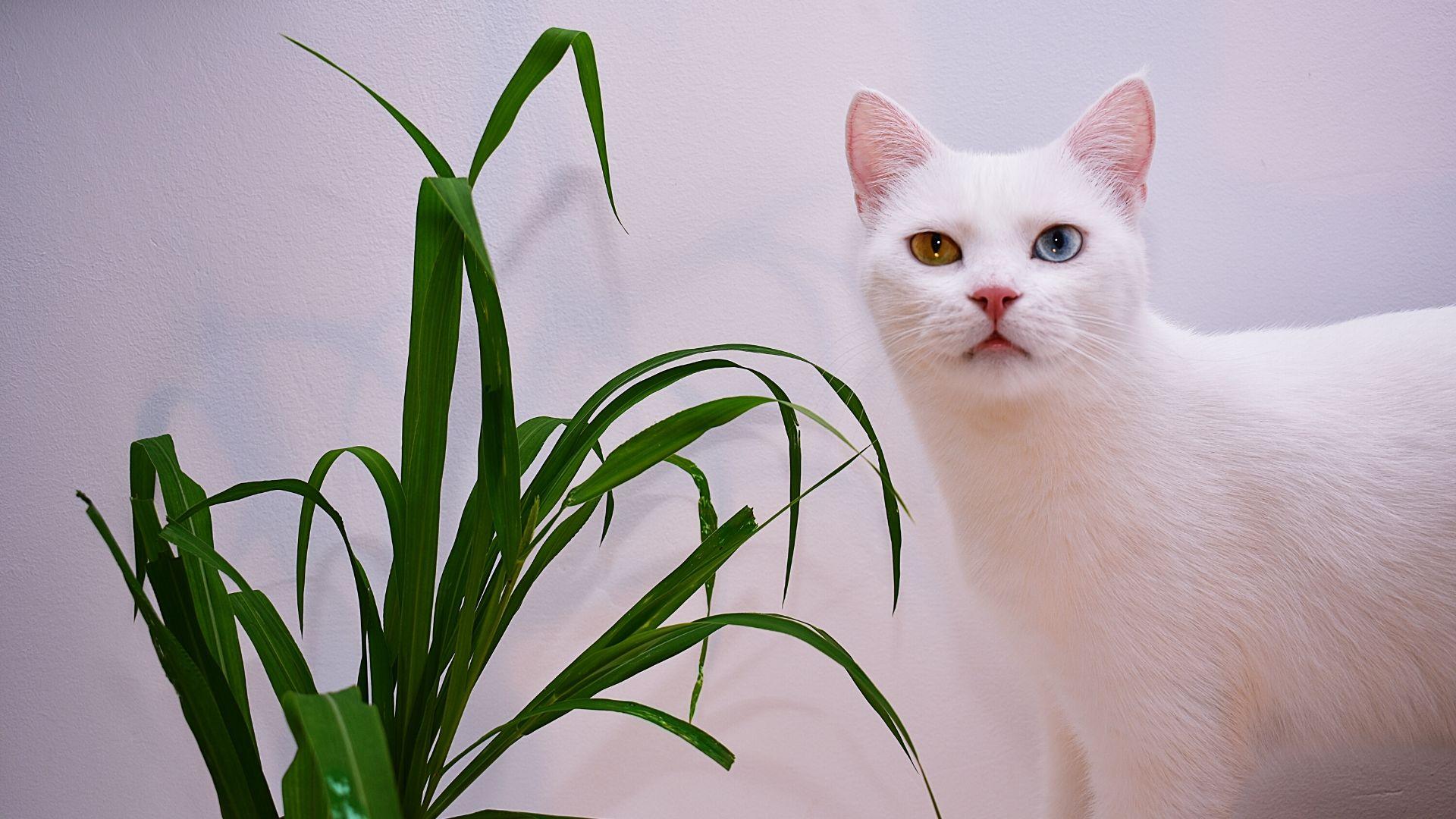 Katze Gefahr vergiften