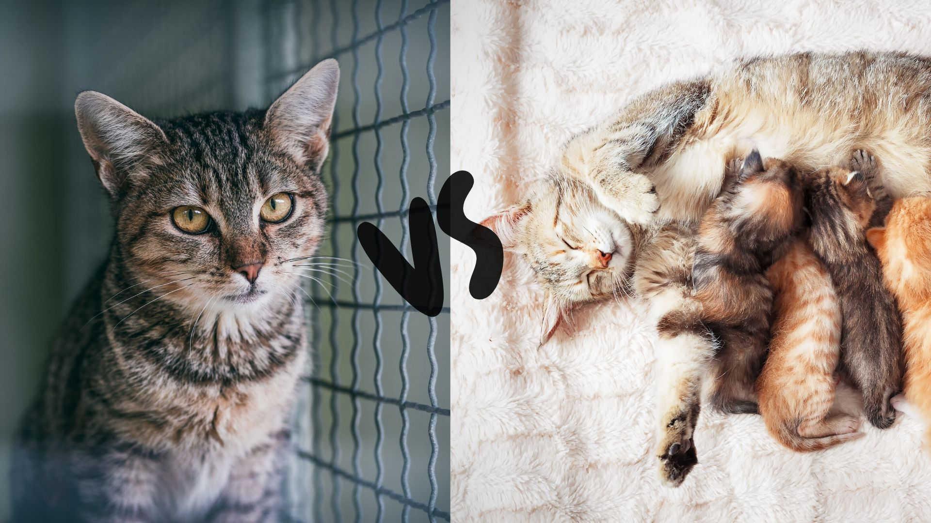Katze aus dem Tierheim oder vom Züchter2