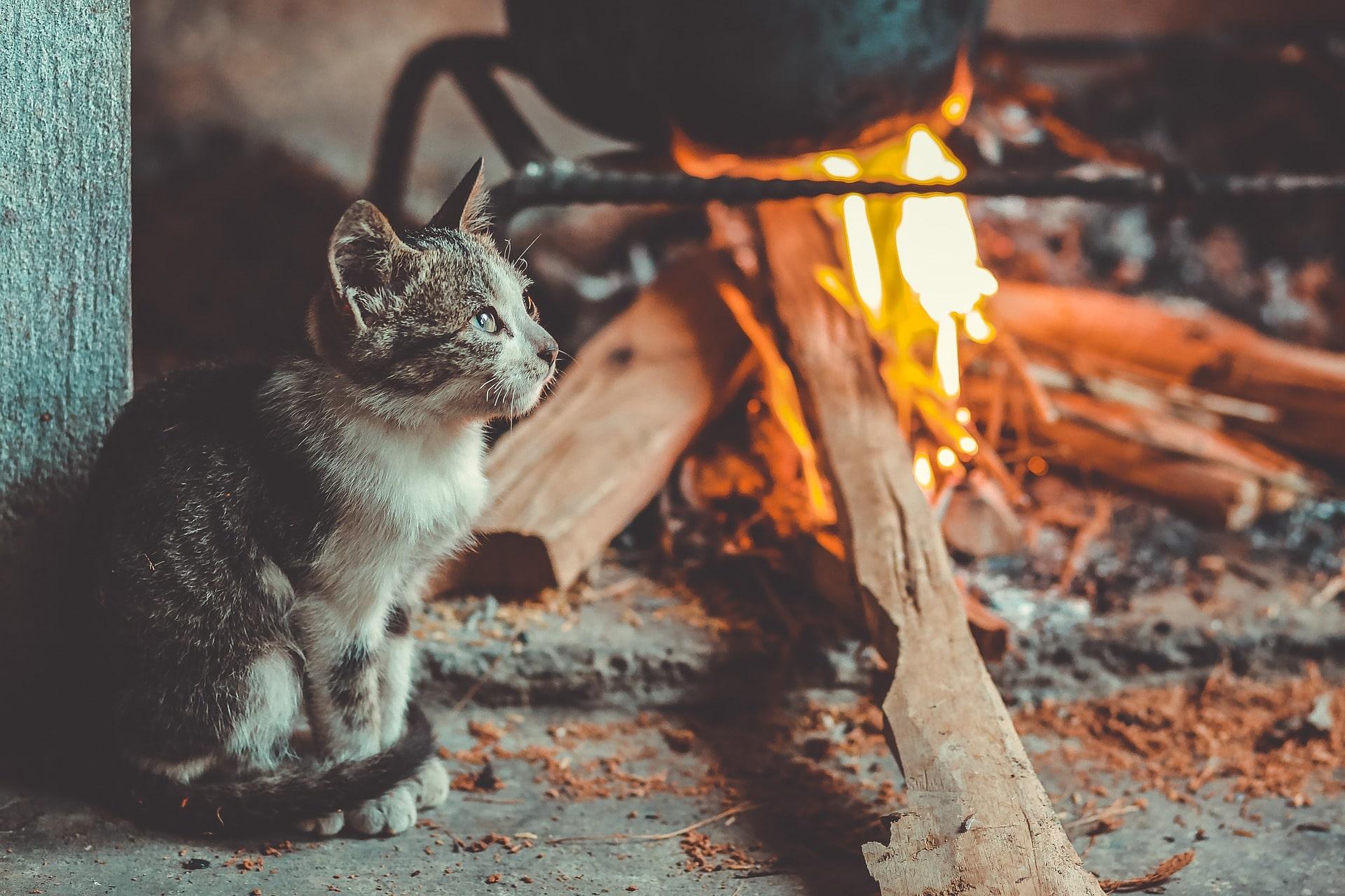 Katze Gefahr verbrennen