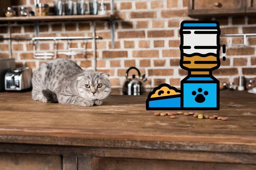 Futterautomat für Katzen - Modelle im Vergleich