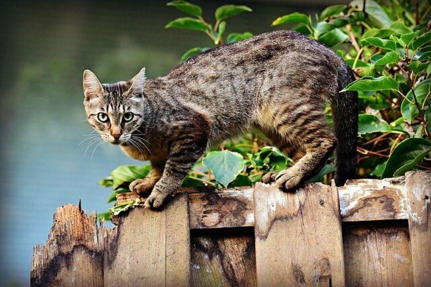 Gefahren einer Katze im Alltag