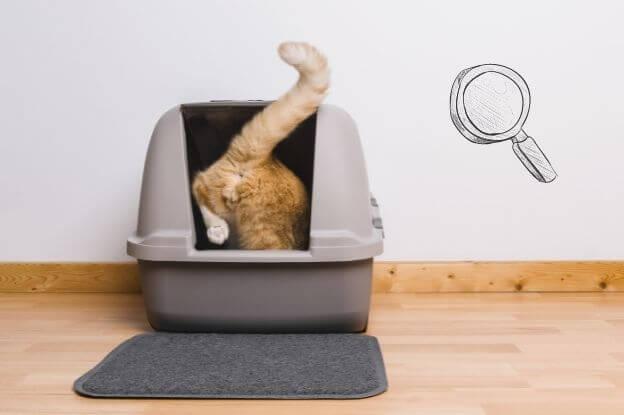 Oft ist auch das Katzenklo der Grund warum deine Katze ins Bett pinkelt