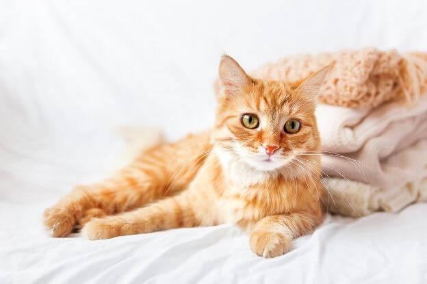Pinkelt deine Katze ins Bett weil sie sich daran gewöhnt hat?
