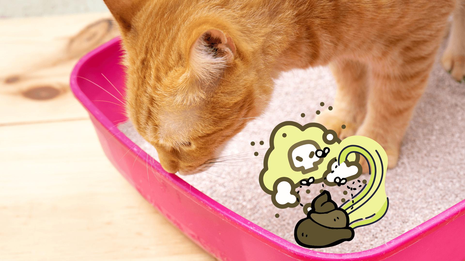 Katzenklo stinkt, 4 Tipps gegen den Geruch