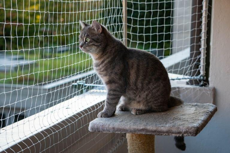 Balkon katzensicher machen - 3 einfache Tipps & Anleitung