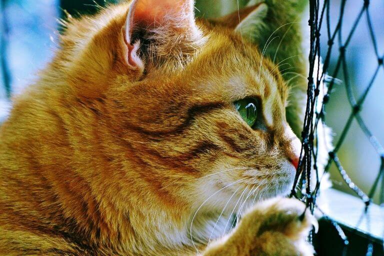 Balkon katzensicher machen - Die richtige Maschengröße auswählen