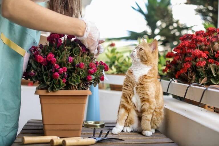 Balkon katzensicher machen - die Pflanzenauwahl sollte beachtet werden